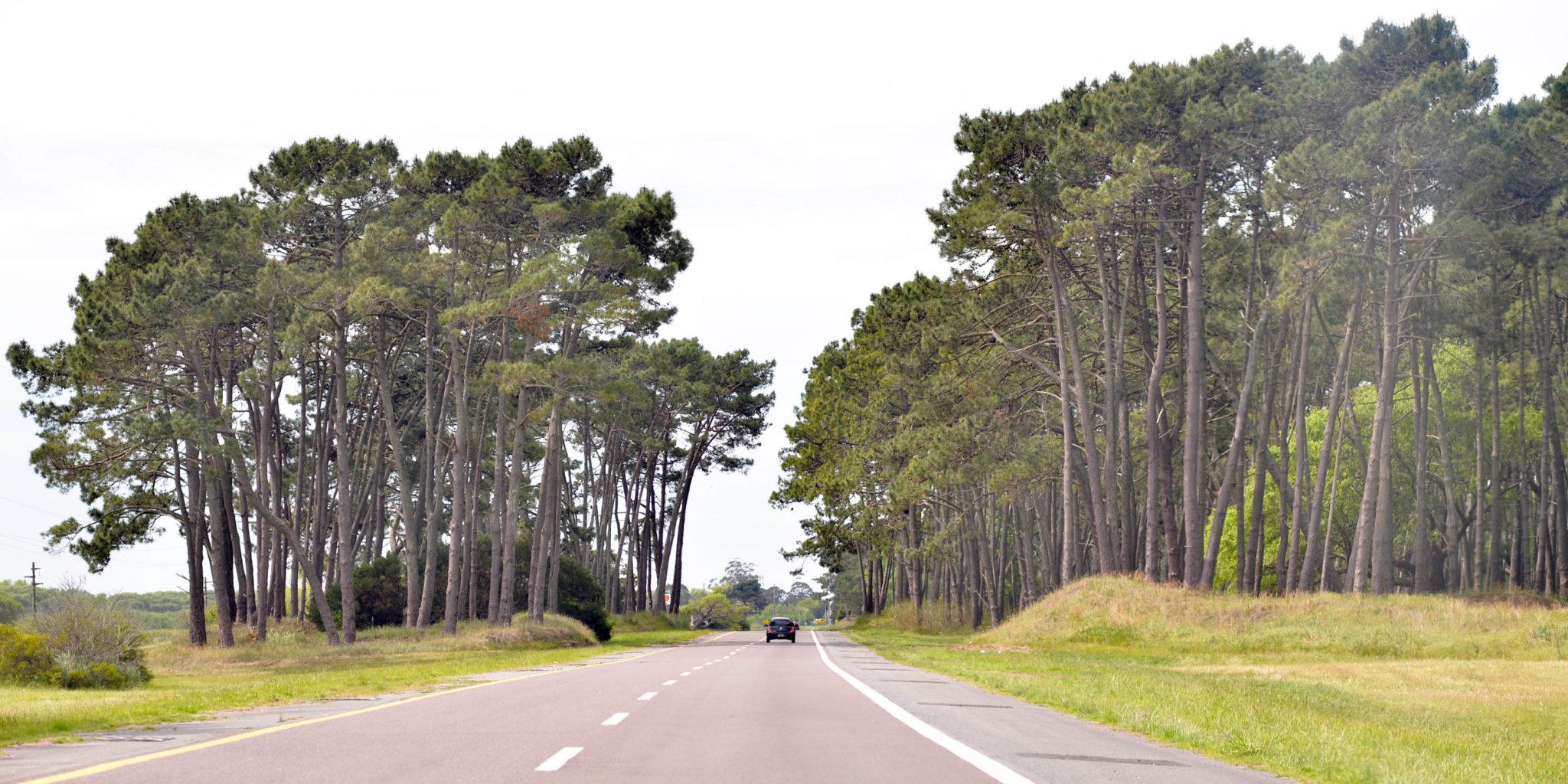 La ruta 11 ya es doble mano desde hace varios años entre Pinamar y Villa Gesell. (Foto Ricardo Stinco)